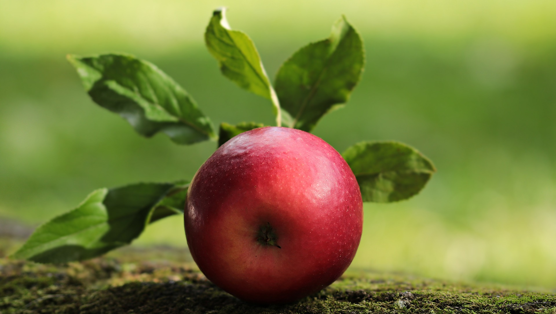 Ernährungstipps - gesunden und fitten Körper